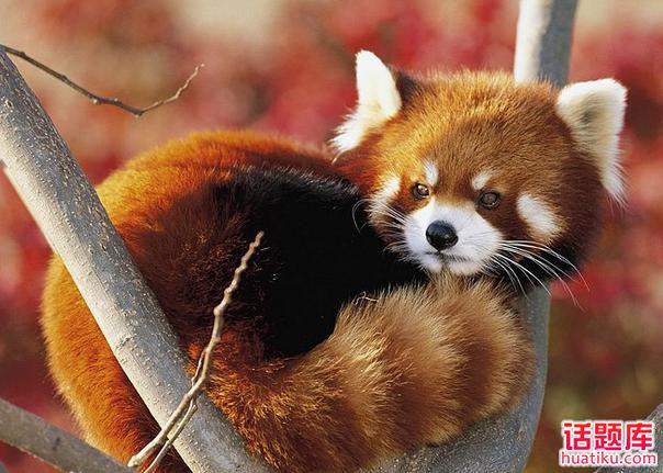 """聊聊""""盘点全球十大最可爱的动物""""的话题"""