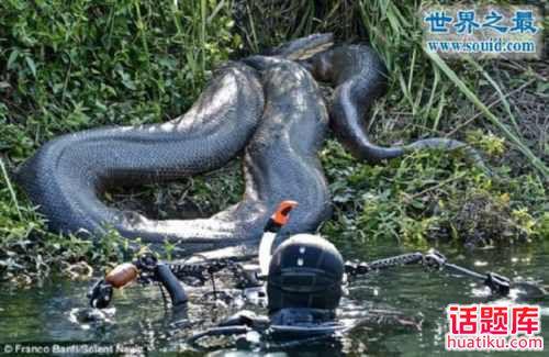 """策策""""最大蟒蛇,实拍世界上最大的蟒蛇,长达19米吃人怪兽(图)""""奇闻轶事"""