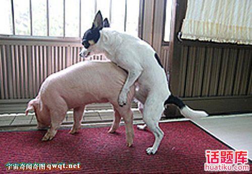 猪交配图_美女与马xingjiao_Xingjiao_动态xingjiao_美女床上xingjiao视频 - www.ggxx5.com
